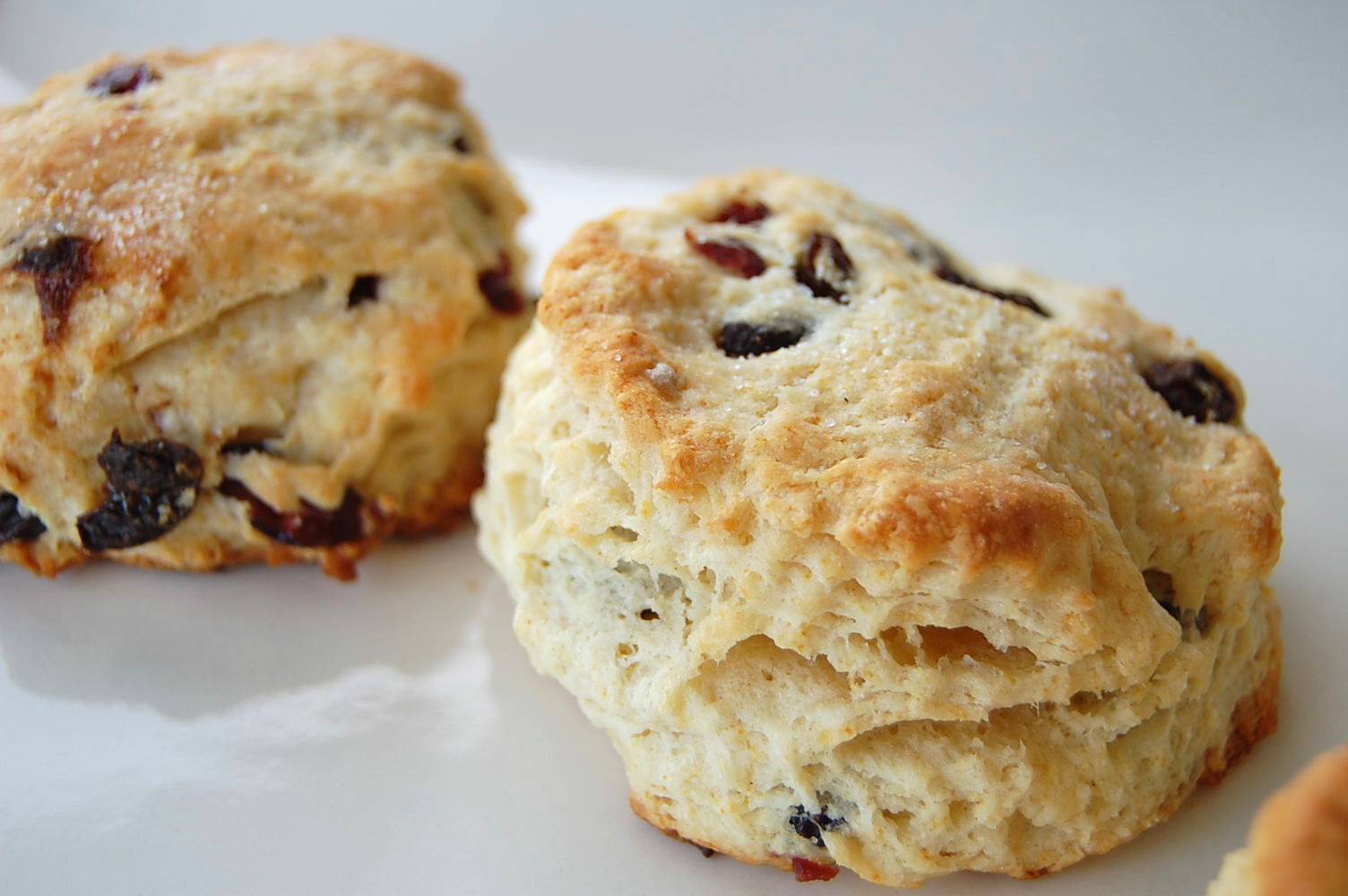spiced-eggnog-biscuits-with-cranberries